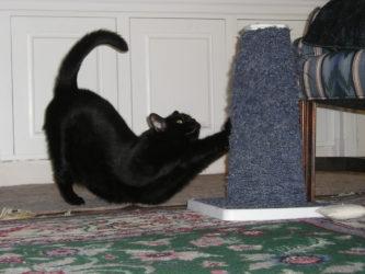 Что делать чтобы кот не царапал диван?